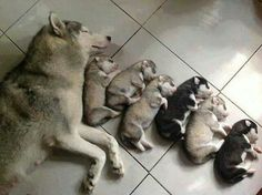 Sleeping With The New Family