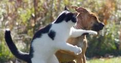 Sometimes, cats turn the tables on their popular sparring partner