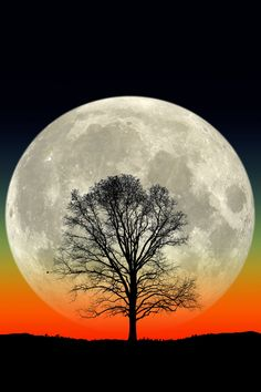 Big Tree. Big Moon. - A full moon rises behind the silhouette of a lone tree in this composite photo.