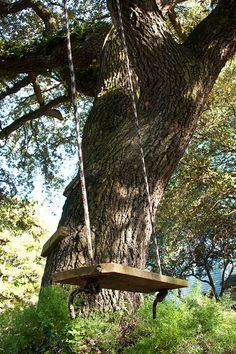 ...who can resist a tree swing?  A simple time machine back to one's youth...~dkb~   ( see www.discoveringth...)