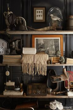 Curated vignette - black walls, shelving love this. Cabinet Of Curiosities, Natural Curiosities, Interior Architecture, Interior Design, Living Spaces, Living Room, Black Walls, Oeuvre D'art, Decoration