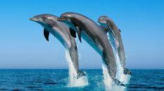Dolphins Tour in Hurghada Dolphin Hd, Dolphin Tours, Safari, Beast Creature, Beautiful Nature Wallpaper, Ocean Creatures, Sea And Ocean, Ocean Life, Marine Life