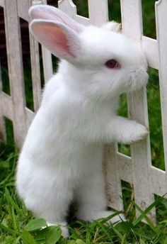 In the event you are searching for a furry friend which is not only cute, but easy to keep, then look no further than a pet bunny. Cute Baby Bunnies, Cute Baby Animals, Animals And Pets, Funny Animals, Beautiful Creatures, Animals Beautiful, Hamsters, My Animal, Pet Birds