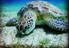 Snorkeling in the US Virgin Islands