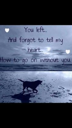 Losing A Dog Quotes Grief Rainbow Bridge Pet Loss Dog Death Quotes, Dog Quotes Sad, Quotes About Dogs, Dog Best Friend Quotes, Pet Loss Quotes, Baby Quotes, I Love Dogs, Puppy Love, Lucky Puppy