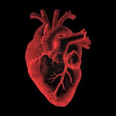 Free Stock Photo of Human Heart - Anatomical Rendering on Dark Background   Download Free Images and Free Illustrations