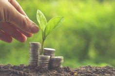 Conheça 4 investimentos de baixo risco para aplicar seu dinheiro