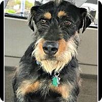 Adopt A Pet :: Erna - Tombstone, AZ