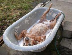 interesting animal photos - Google Search