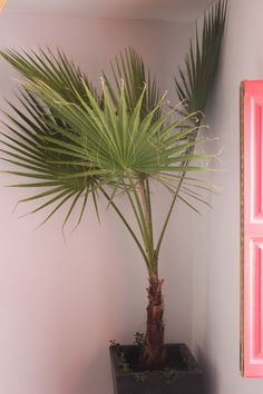 African Inspired home decor/like this potted palm