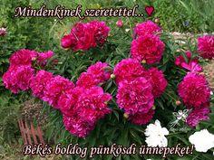 "Photo from album ""Пионы on Yandex. Peonies, Bloom, Seasons, Nature, Flowers, Plants, Colors, Naturaleza, Seasons Of The Year"
