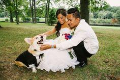 A bride, a groom, a cake, a #Corgi! http://sulia.com/my_thoughts/db2b8b60-9ede-451b-b8e0-c6ecbefb4ef2/?source=pin&action=share&btn=small&form_factor=desktop&pinner=124041943