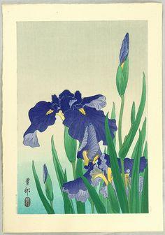 Shoson Ohara: Flowering Iris - Japanese Art Open Database - Ukiyo-e