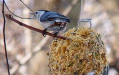 DIY: How to Make Suet Winter Bird Feeders | Inhabitat - Sustainable Design Innovation, Eco Architecture, Green Building