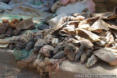 7 of the freakiest places on the planet- Akodessewa Fetish Market in Lome, Togo: the strangest pharmacy on earth.