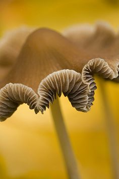 i don't even like mushrooms, but this is a great shot ;)