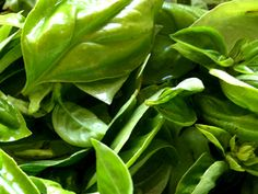 How to Harvest Basil in Fall & Preserve it for Tasty Winter Meals