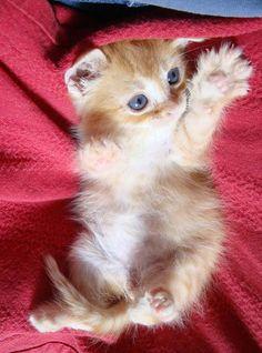 Kitten high paw!!