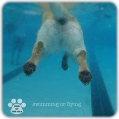 DOG OF THE DAY  Jul.26,2012 @megd829