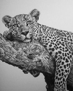 Testing Leopard by Warren Dale Cary