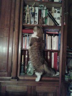 Gatsby -bibliothèque décembre 2013