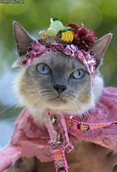 Cat in a flower hat. Just in time for Easter!