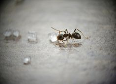 Ants are a problem for many people. Even if you keep your house spick and span, ants may still make an appearance every once in a while. Get Rid Of Ants, Blossom Garden, Nature, Feng Shui, Ideas Rápidas, Sugar Ants, Remedies, Bonsai, People