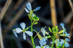White flower macro | by randyherring
