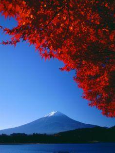Mount Fuji and Maple Leaves, Lake Kawaguchi, Yamanashi, Japan