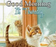 Cute Kitty Its Thursday Good Morning Good Morning Love Gif, Good Morning Picture, Morning Pictures, Good Morning Images, Morning Pics, Thursday Greetings, Good Morning Greetings, Thursday Gif, Happy Thursday Pictures