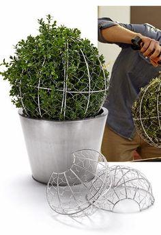 Topiary topiaries by aurora Topiary Garden, Garden Pots, Container Gardening, Gardening Tips, Dream Garden, Garden Projects, Garden Inspiration, Beautiful Gardens, Garden Landscaping