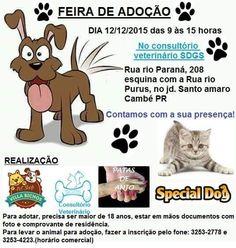 BONDE DA BARDOT: Feira de adoção acontece no Jardim Santo Amaro, em Cambé, no Paraná, neste sábado (12/12)