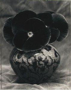 Black Flower Still Life