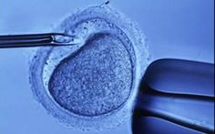 http://how-to-get-pregnant.us/fertility-treatments.html The best infertility medical treatments. People with MS who receive fertility treatments have higher relapse rates...           photo credit: www.telegraph.co.uk
