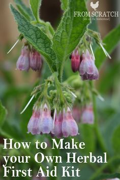 Make your own herbal first aid kit