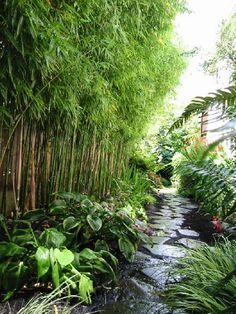 5 Warm Tips: Small Backyard Garden Raised Planter simple backyard garden how to grow.Backyard Garden On A Budget How To Build backyard garden on a budget water features.Backyard Garden On A Budget How To Build. Tropical Backyard, Tropical Landscaping, Front Yard Landscaping, Tropical Gardens, Cartoon Garden, Home Garden Design, House Design, Bamboo Plants, Bamboo Wall