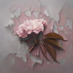 rosy by Patrick Kramer