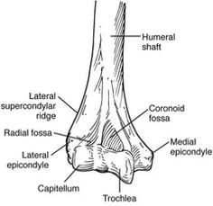 The anterior and posterior views of the femur and the