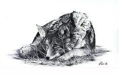 Killing Time is about a sleepy coyote that Lynn saw in Yellowstone National Park. The fur is so realistic that you almost want to reach out and