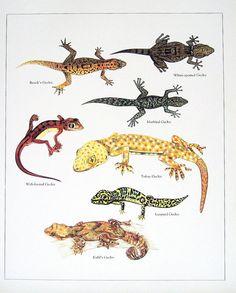 Geckos 1984 Vintage Book Print Brook's Gecko by mysunshinevintage, $10.00