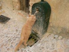 Seillans Fontaine à chat