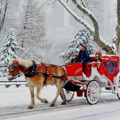 A white Christmas in New York. This is Central Park NYC New York Christmas, Christmas Central, Winter Christmas, Christmas Time, Merry Christmas, Christmas Scenes, Winter Snow, Christmas Ideas, Christmas Photos