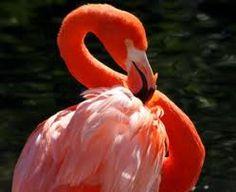 Touch a live flamingo
