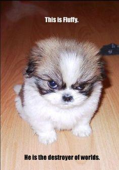 fluffy - Animal Humor Photo (613096) - Fanpop