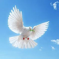 ~~~ Romans ~~~ Now may the God of hope fill you with all joy and peace in believing, that you may abound in hope by the power of the Holy Spirit. Spirit Of Truth, Holy Spirit, Beautiful Birds, Animals Beautiful, Dove Release, Dove Pictures, Dragon Series, Wild Olive, Prayer Verses
