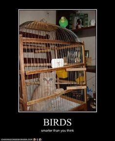 BIRDS....smarter than ya think!