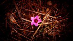DSC04137 | Flickr - Photo Sharing!