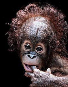 Oranguinho. by Birte Ragland http://photo.net/photodb/folder?folder_id=935220