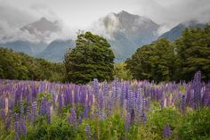 12 days on the South Island of New Zealand: From the Golden Bay along the west coast to Queenstown, over to the east coast and finally to Christchurch. South Island, East Coast, New Zealand, Castle, Mountains, Day, Travel, 12 Days, Middle Earth