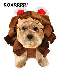Cowardly Lion Dog Costume - Wizard of Oz Collection.  http://puprwear.com/item_9321/Cowardly-Lion-Dog-Costume--Wizard-of-Oz.htm